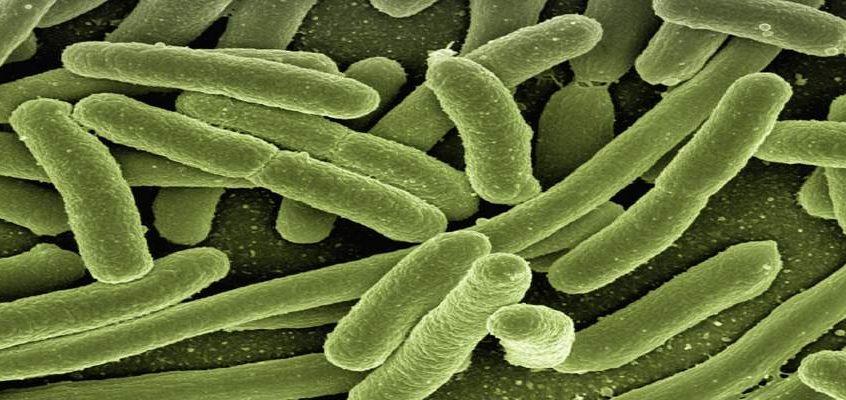 Meet some waterborne diseases